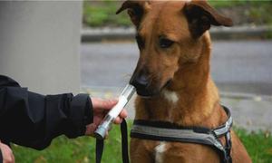 Chó ngửi được dấu hiệu ung thư sớm ở người