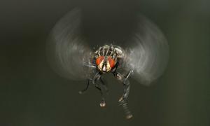 Tại sao côn trùng có thể lơ lửng trong ôtô