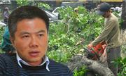 GS Ngô Bảo Châu lên tiếng về việc chặt 6.700 cây xanh ở Hà Nội