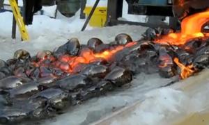 'Trứng từ địa ngục' xuất hiện khi đổ dung nham lên băng