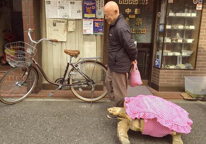 Cụ ông dắt rùa đi dạo 1,5 km mỗi ngày