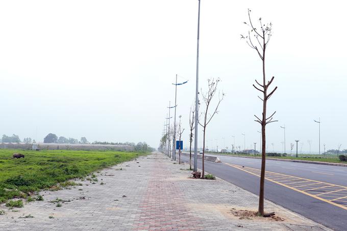 Cây mới trồng chết hàng loạt trên đường 6.600 tỷ ở Hà Nội