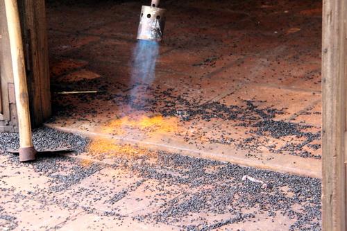Hiện nay gia đình bà Thêu dùng phương pháp khò lửa từ bình ga mới diệt được chúng. Ảnh: Hoàng Trường