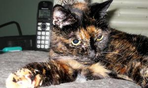 Con mèo già nhất thế giới qua đời