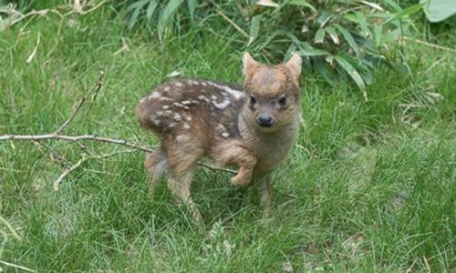 ht-deer-lb-150608-16x9-992-5125-14338145