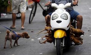 Lễ hội thịt chó ở Trung Quốc vẫn diễn ra bất chấp phản đối
