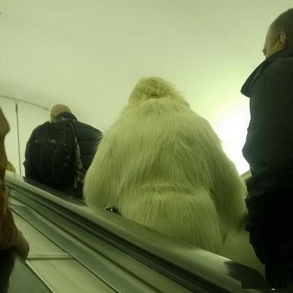 Nhìn từ xa cứ tưởng là gấu bắc cực đi thang máy.