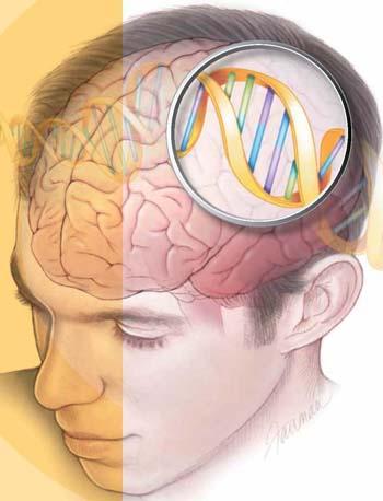 brain-genes-2107-1435288478.jpg