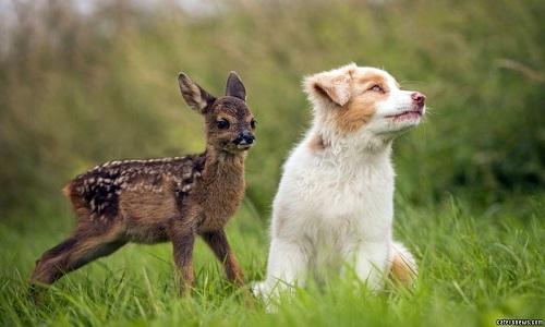 VNE-Friendship-between-puppy-a-2516-9986