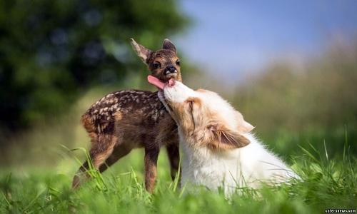 VNE-Friendship-between-puppy-a-3346-3609