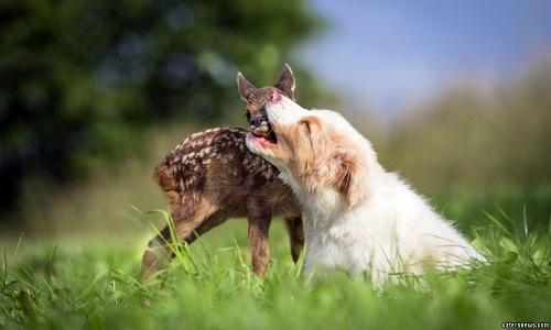 VNE-Friendship-between-puppy-a-3943-7655