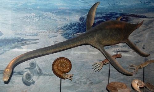 VNE-Plesiosaur-5602-1437960776.jpg