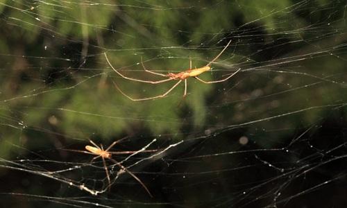 VNE-Giant-spider-webs-take-ove-8458-1942