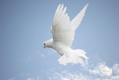 """""""The dove dove into the bushes""""."""