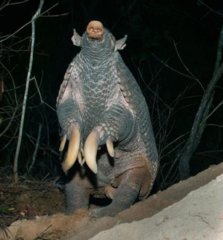 Những loài vật có móng vuốt quá cỡ