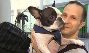 Phi công chuyển hướng chuyến bay để cứu sống chó