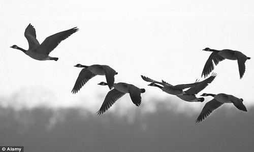 VNE-Bird-strike-1-6441-1443685574.jpg