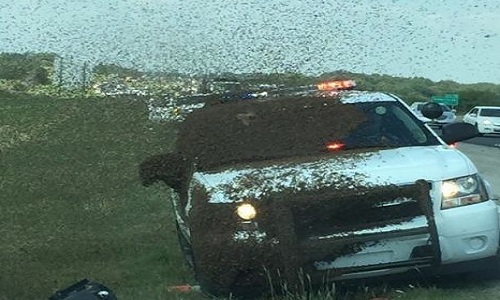 VNE-Sheriff-s-deputy-gets-trap-2730-3521