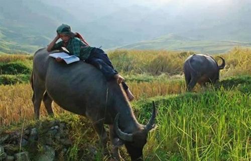Phong cách học tập rất Việt Nam.