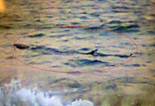 Ảnh cá lạ do nhân viên cứu hộ bờ biển Tuy Hòa chụp được sáng 17/11.