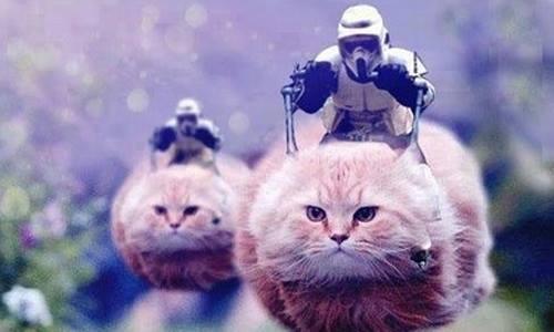 HHàng trăm bức ảnh mèo, trong đó có nhiều bức ảnh chế hài hước, đang ngập tràn mạng xã hội Bỉ