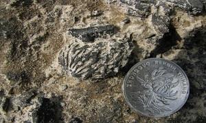Hột đào hơn hai triệu tuổi giống hệt ngày nay