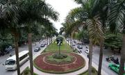 Phá bỏ cây xanh, thảm cỏ trên tuyến đường đẹp ở thủ đô
