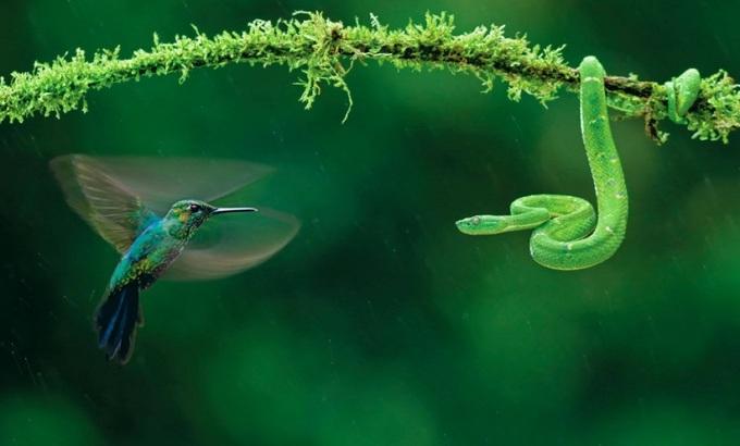 Những khoảnh khắc kỳ thú trong tự nhiên