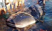 Ướp xác cá nhám hơn tấn dạt bờ