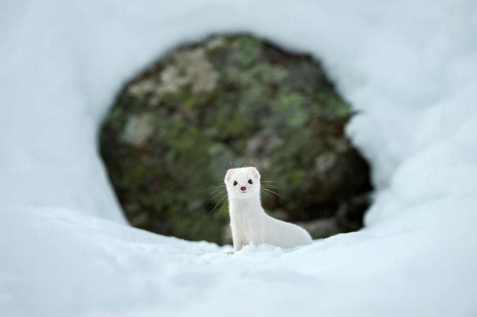 Những động vật biến hình khi đông đến