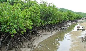 Cách chống xâm ngập mặn ở Đồng bằng sông Cửu Long