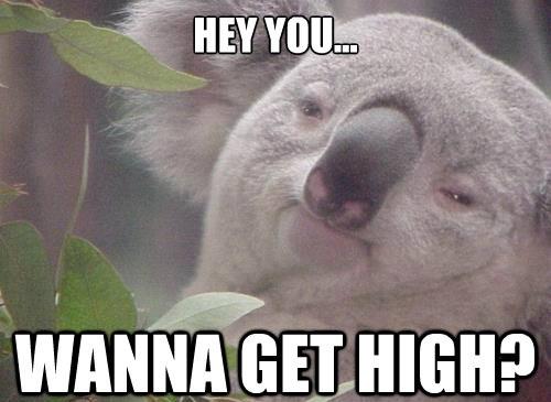 High /haɪ/ - Nghĩa thường (adj): being a largedistance from top to bottom - cao - Nghĩa từ lóng (adj): describing a person who is experiencing the effect of drugs making them mentally excited - (người) phê thuốc, phấn khích. Ví dụ: He always gets into fights when hes high. (Mỗi khi phê thuốc, cậu ấy lại lao vào đánh nhau)