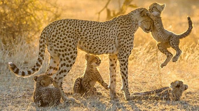 Những bà mẹ vĩ đại trong thế giới động vật