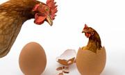 Con gà có trước hay quả trứng có trước?