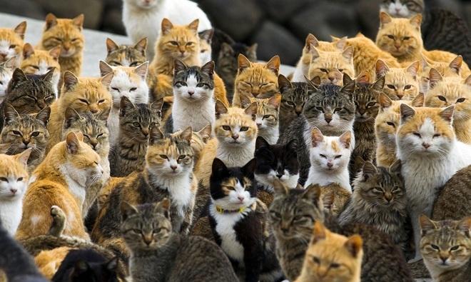 Những thiên đường động vật trên thế giới
