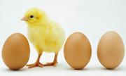 Một quả trứng cộng ba quả trứng bằng mấy quả trứng?