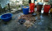 Ảnh hot nhất cộng đồng: Làm nem chua trên nền nhà bẩn thỉu