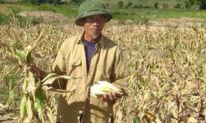 3.500 tấn gạo cứu đói người dân Lạng Sơn, Điện Biên, Tây Nguyên