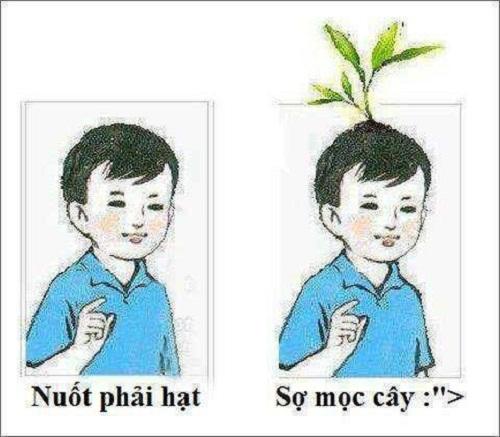 Nỗi sợ ngày thơ ấu khi nuốt phải hạt trái cây là bị phụ huynh dọa sẽ mọc thành cây trong bụng.