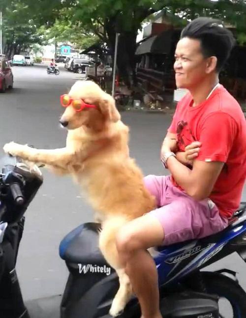 Khi chó thành quái xế.
