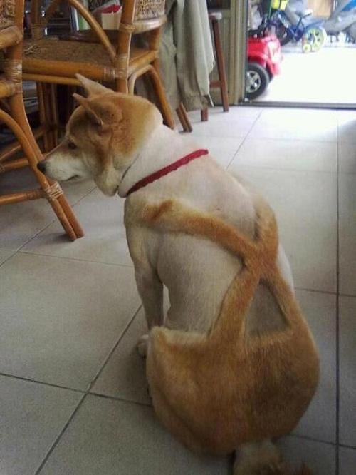 Khi cún cưng được 'diện' mốt quần yếm.