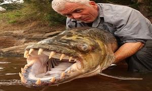 Bộ sưu tập quái ngư nước ngọt của thợ săn lão luyện