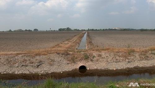 Hạn hándo El Nino gây thiệt hại về nông nghiệp ở nhiều nước châu Á. Ảnh: Mediacorp