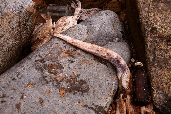 Cá chết giắt khe đá dọc bờ biển Hà Tĩnh
