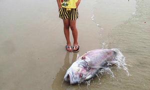 'Phó chủ tịch Hà Tĩnh nói yên tâm ăn cá, tắm biển' nóng trên mạng XH