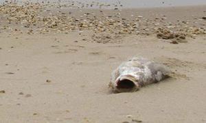 Thủ tướng chỉ đạo khẩn trương làm rõ nguyên nhân cá chết