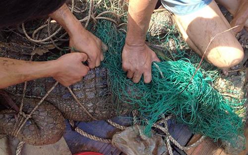 Con cá sâu khoảng 70 kg bị bắt. Ảnh: Công an cung cấp