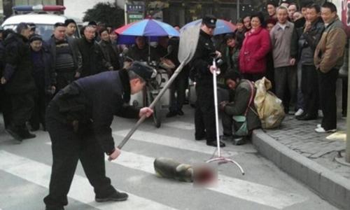 Cảnh sát Trung Quốc giết chó thả rông ngoài đường. Ảnh: theepochtimes.com