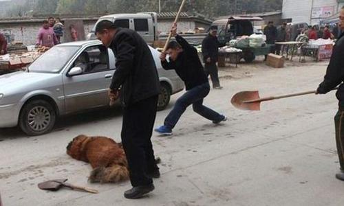 Chó Ngao bị giết ở Thạch Gia Trang, Hà Bắc, Trung Quốc. Ảnh: theepochtimes.com