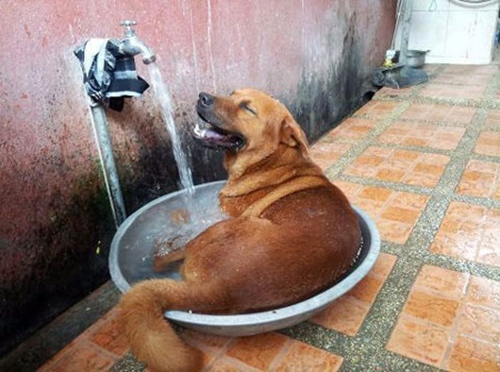 Không gì thoải mái bằng tắm rửa kịp thời.